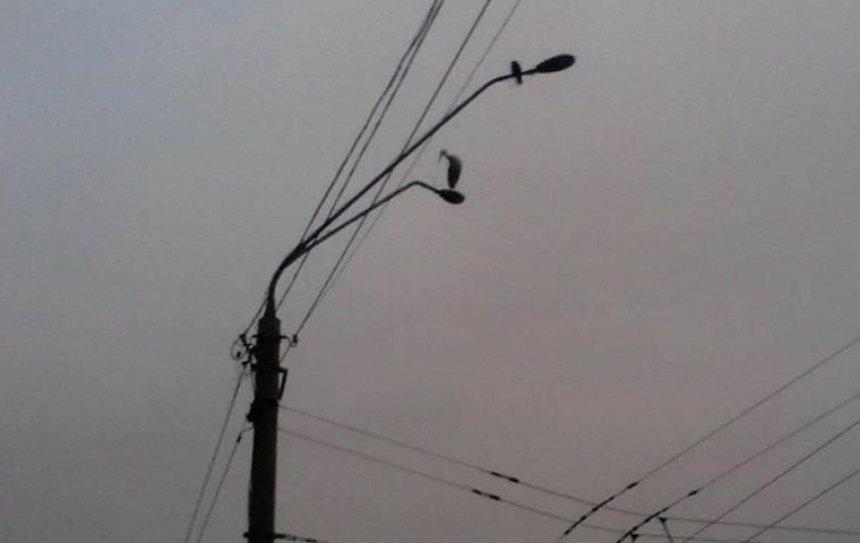 На столбе в Шевченковском районе заметили аиста (фото)