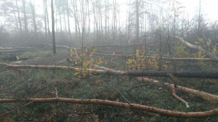 На Лісовому масиві зловмисники повирубували дерева (фото)