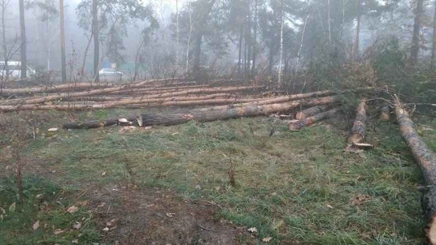 Вместо уничтоженных на Лесном сосен высадят новые деревья