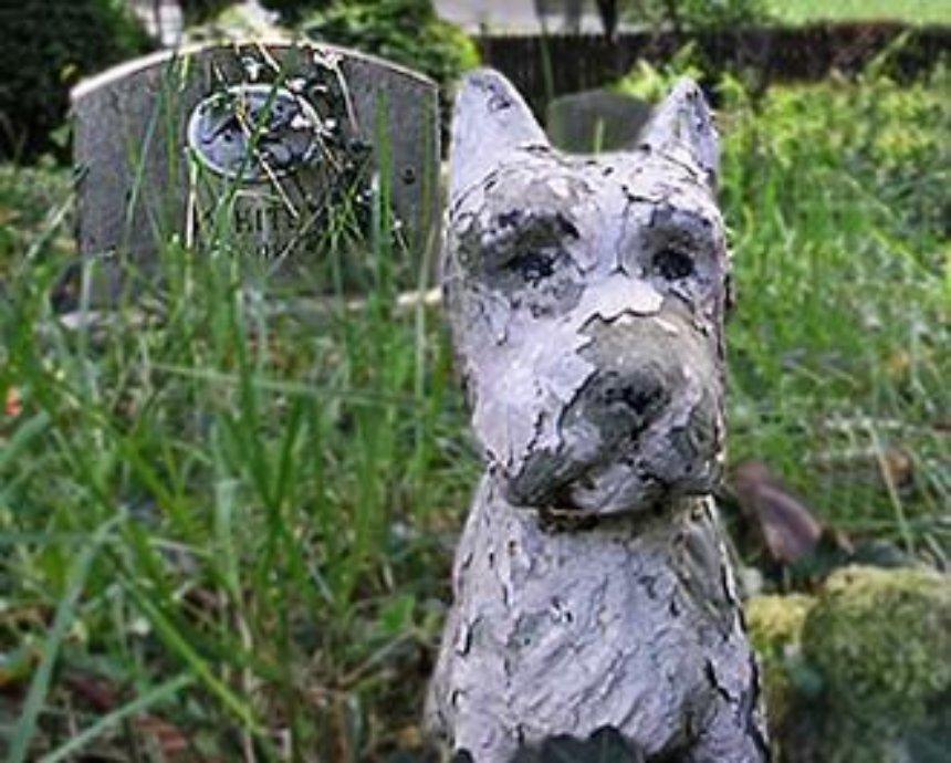 В Киеве строят кладбище для животных