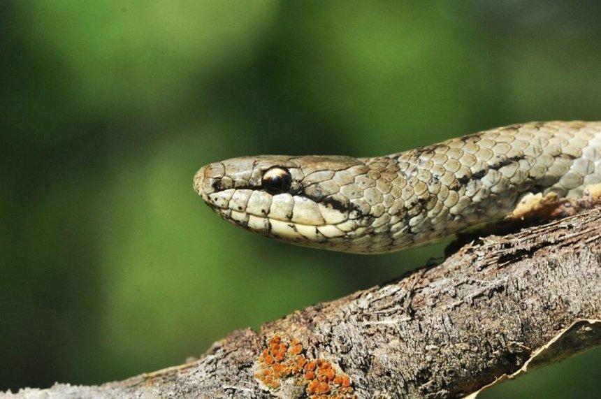 На ДВРЗ киеляне заметили агрессивных змей (фото)