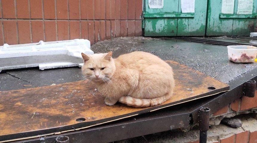 В столице разберут стихийный приют для животных: котам ищут хозяев