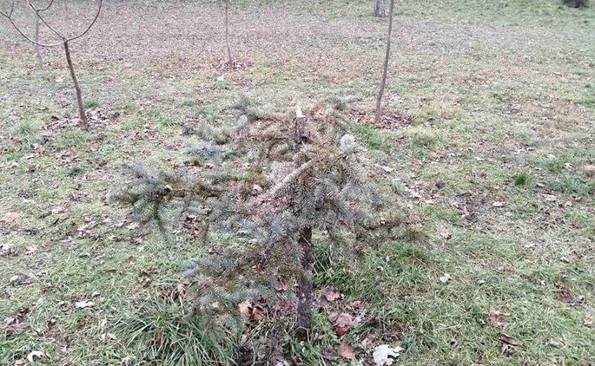 Вандалы спилили елки в двух столичных парках