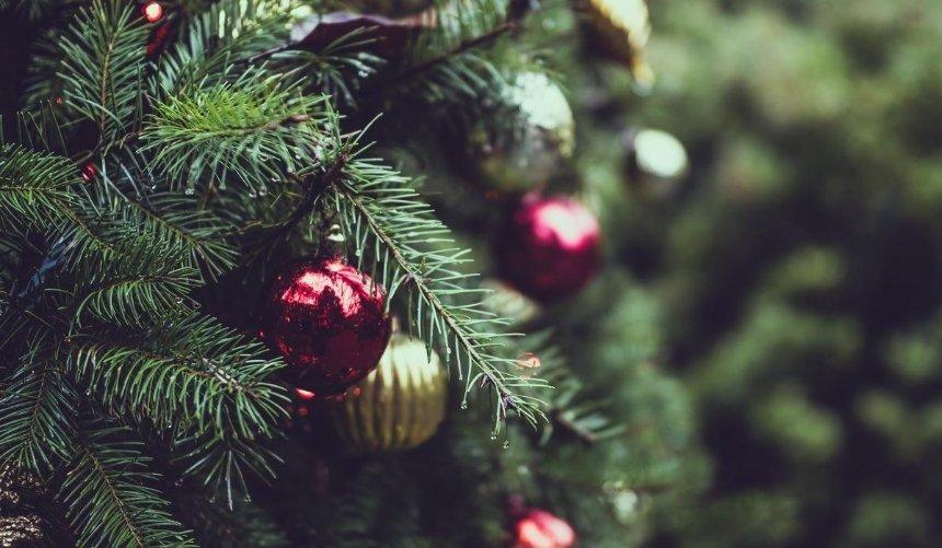 Сколько будут стоить новогодние елки: цены вКиеве идругих городах