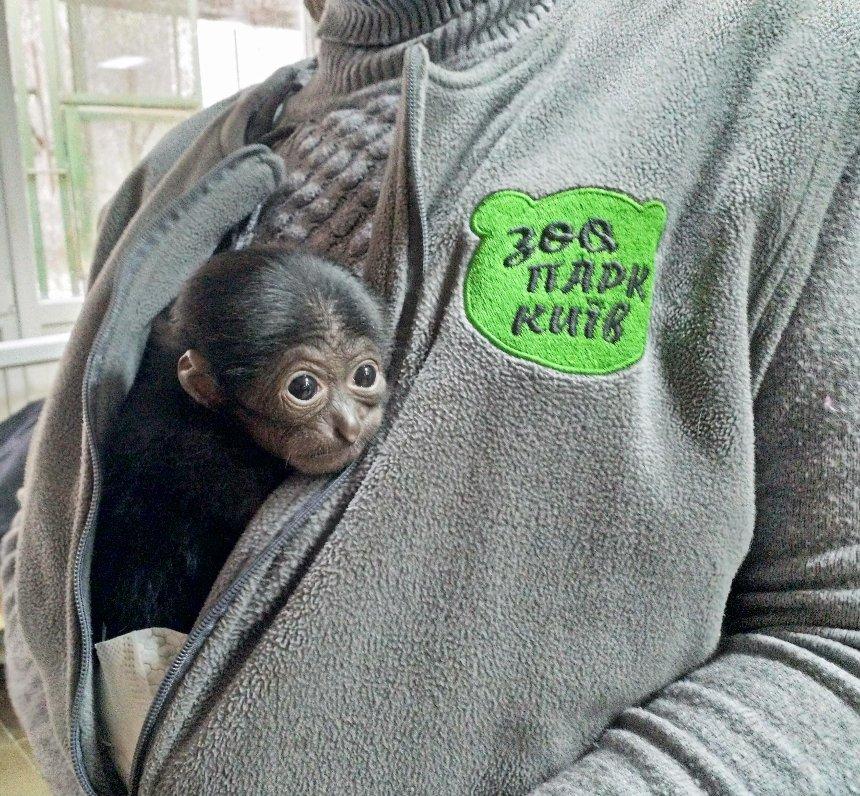 Сиаманг, альпака и дикобраз: в киевском зоопарке беби-бум