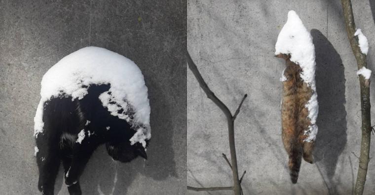 Под Киевом на заборе птицефабрики заметили повешенных кошек (фото, видео)