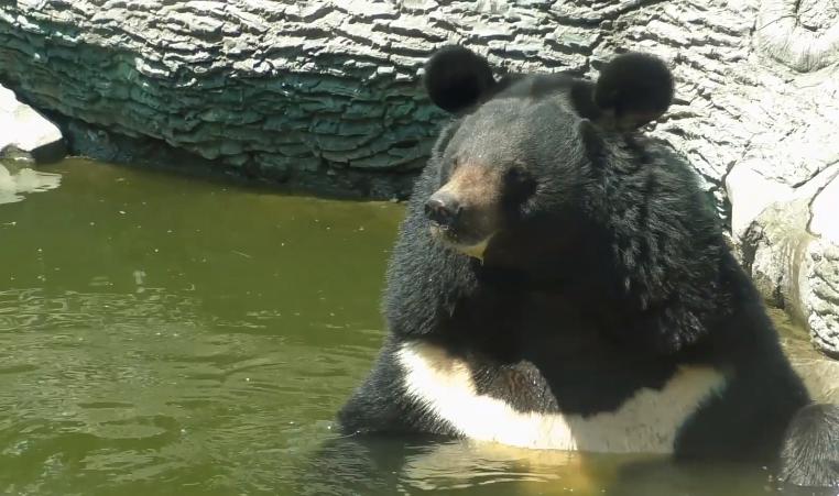 В Киевском зоопарке показали, как животные спасаются от жары (видео)