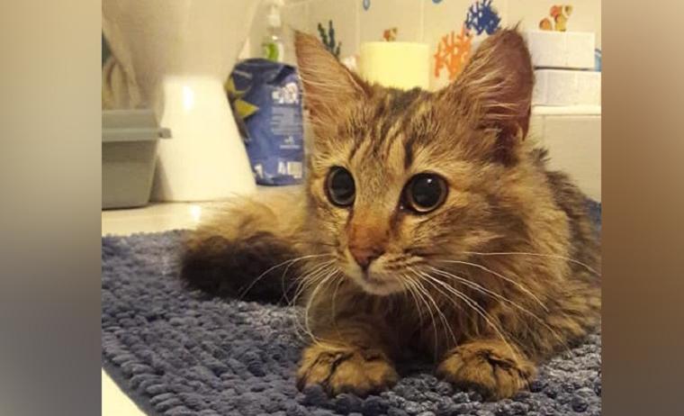 Стала известна судьба кошки, которая полакомилась колбасой в киевском супермаркете (видео)