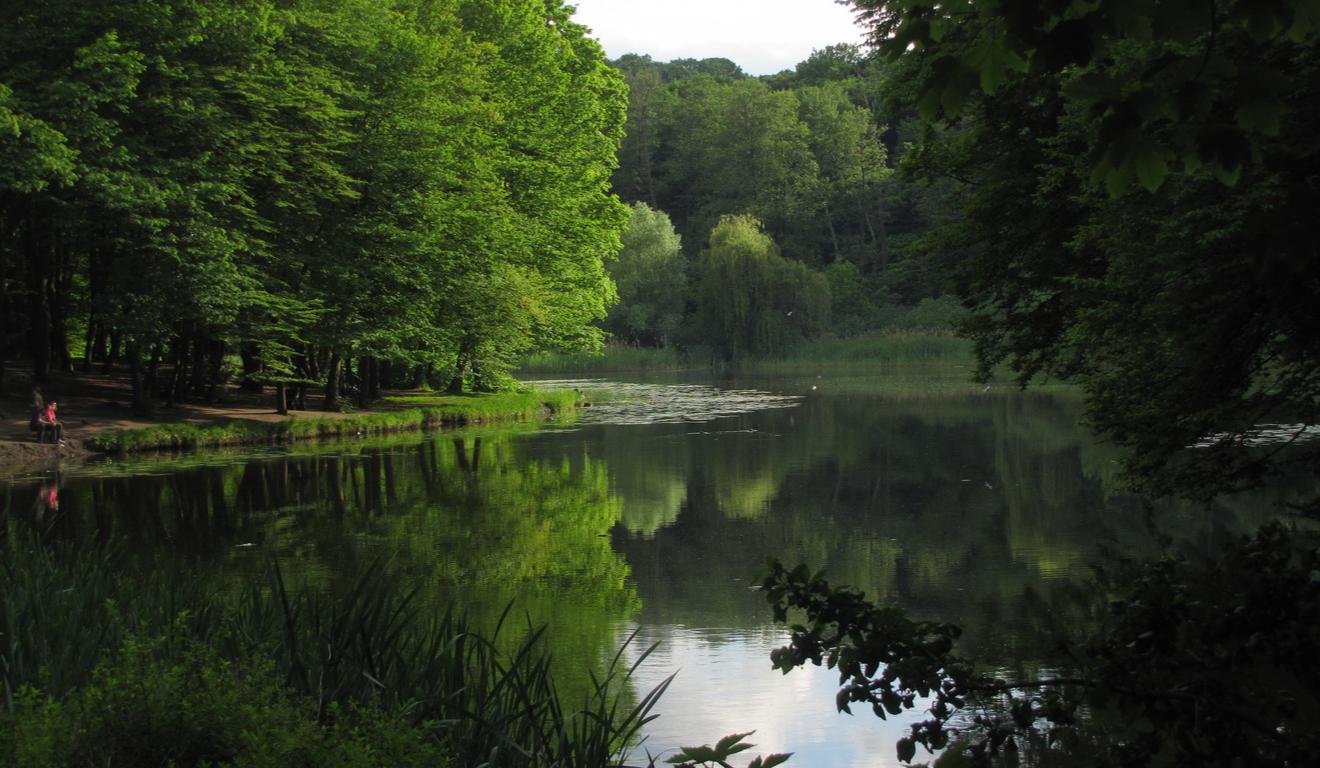 Голосеевский парк планируют отремонтировать: что там изменится