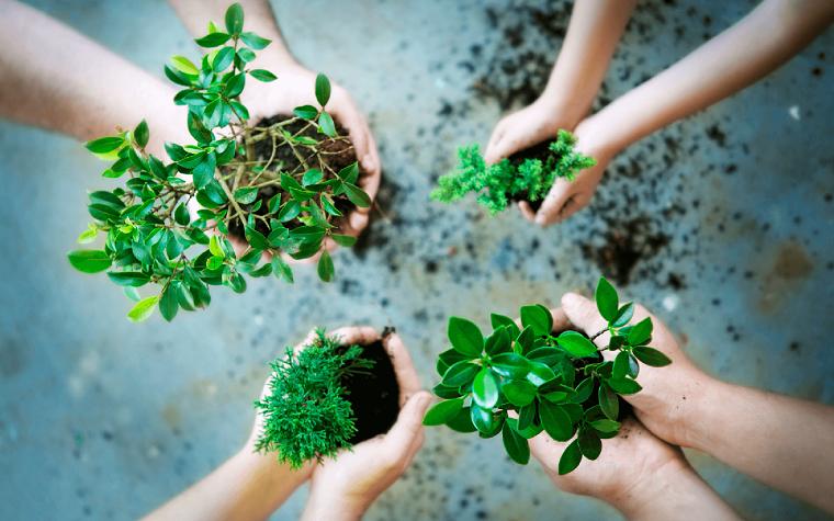 Жители столицы обменяются растениями