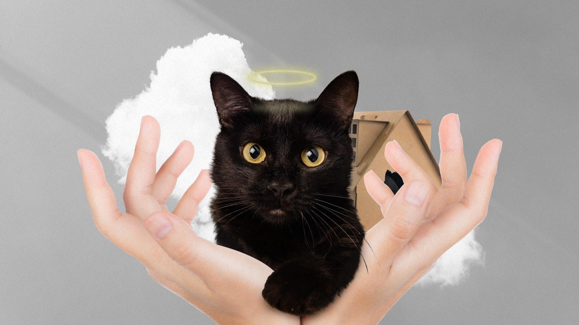 «У Аси кошачий СПИД, у Герды нет лапы»: история Ольги Жирихиной и ее «Кошачьего детского дома»